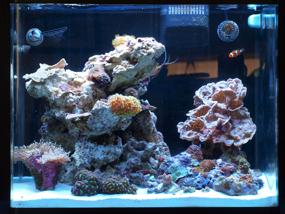 Uxdesigner S Red Sea Max 130 All In One Tanks Nano